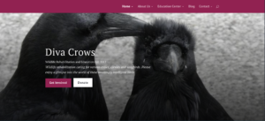 Non Profit Organization WordPress Web Design